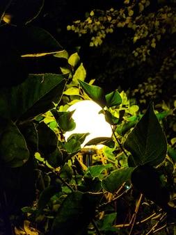 Straat uitstekende lamp met kerstmisboom in de avond buiten.