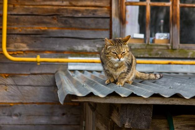 Straatkat op een dak in het dorp
