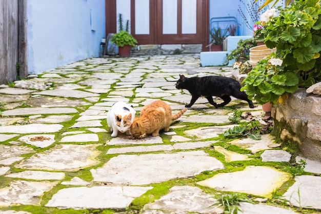 Straatkatten die voedsel eten - concept dakloze dieren.