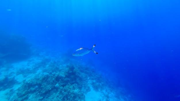 Stralen van de zon, die zich een weg banen door het water van de blauwe zee, verlichten de vissen die langs de bodem zwemmen.
