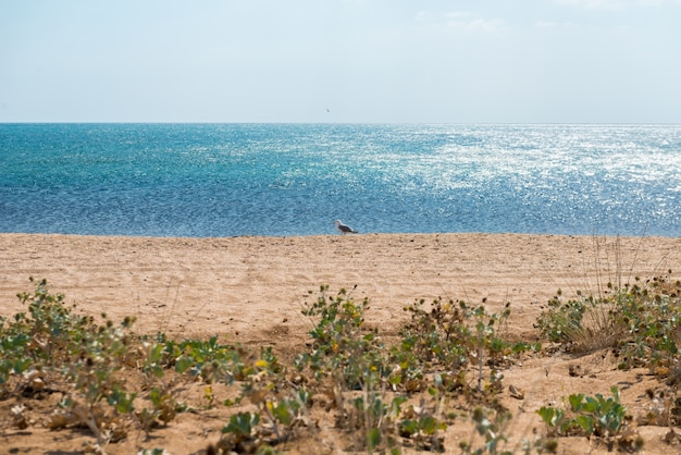 Strand in de krim Gratis Foto