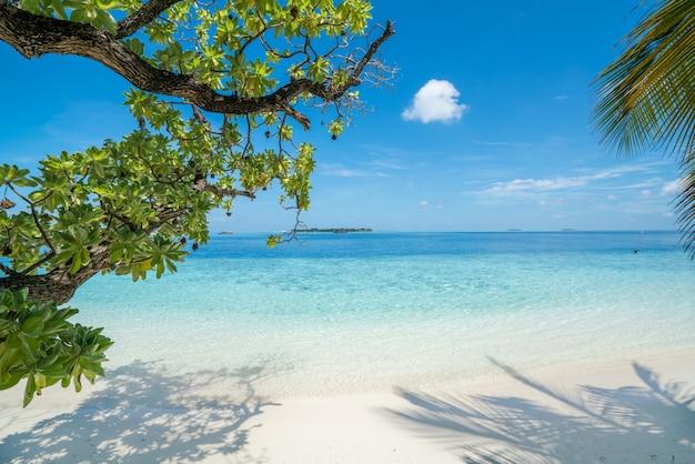 Strand met bomen op de voorgrond