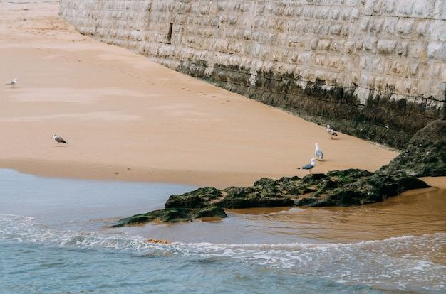 Strand met meeuwen die er doorheen lopen, omringd door de zee en muren onder het zonlicht