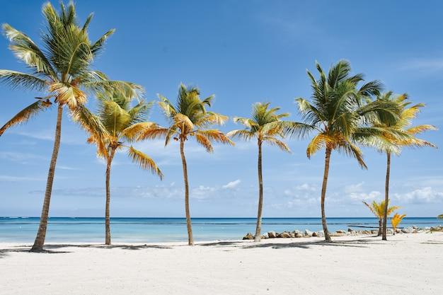 Strand met palmbomen en wit zand