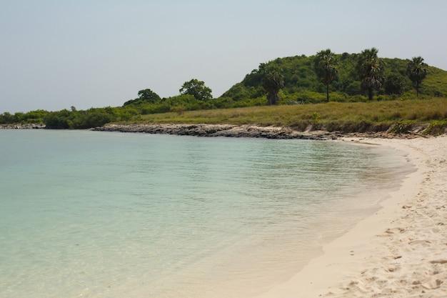 Strand met planten en palmbomen op zanderige bodem van de oceaan