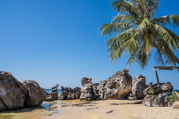 Strand met rotsen en palmboom