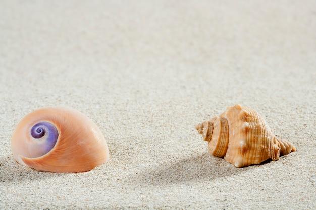 Strand zee slak shell tropisch wit zand close-up