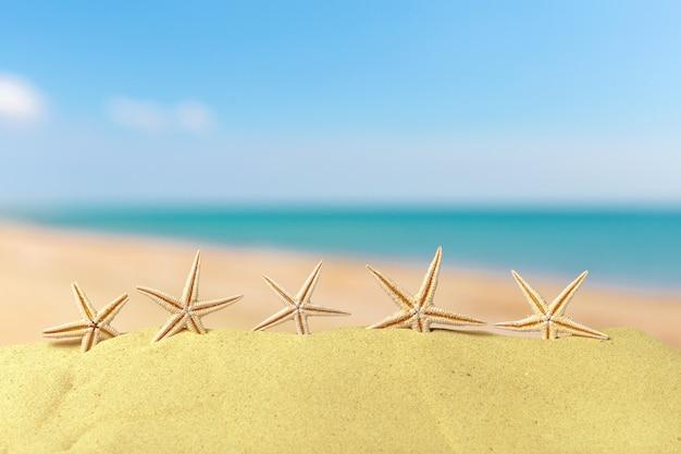 Strandsamenstelling met zeester en exemplaarruimte