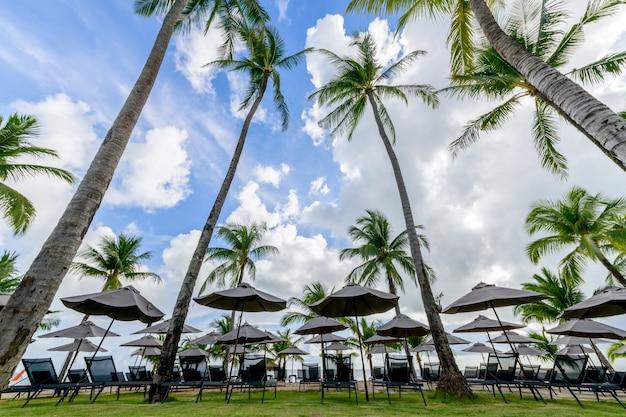 Strandstoelen met parasols omzoomden het strand onder kokospalmen in het zomerseizoen. een plek om te rusten op khao lak beach, provincie phang nga