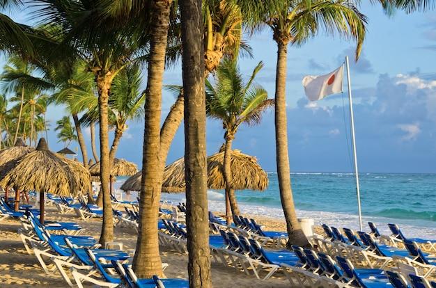 Strandstoelen onder een palmboom