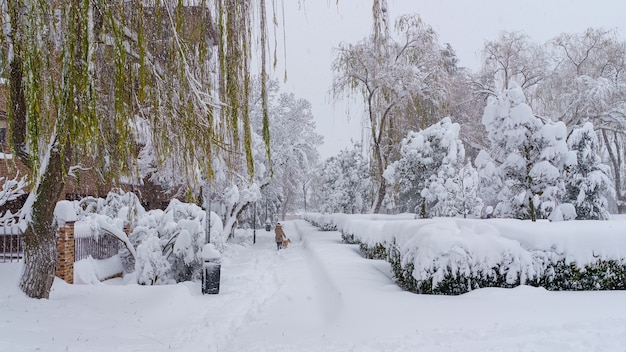 Straten en gebouwen bedekt met sneeuw overdag als gevolg van sneeuwstorm filomena die valt in madrid, spanje. mensen lopen in de sneeuw. spanje