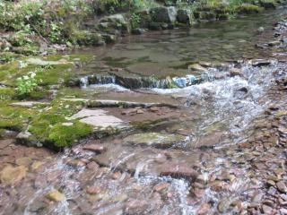 Stream, de natuur
