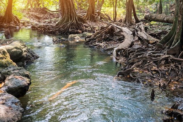 Stream rivier snel landschap met boombos, rotsen prachtige landschap voor vreedzame in het voorjaar