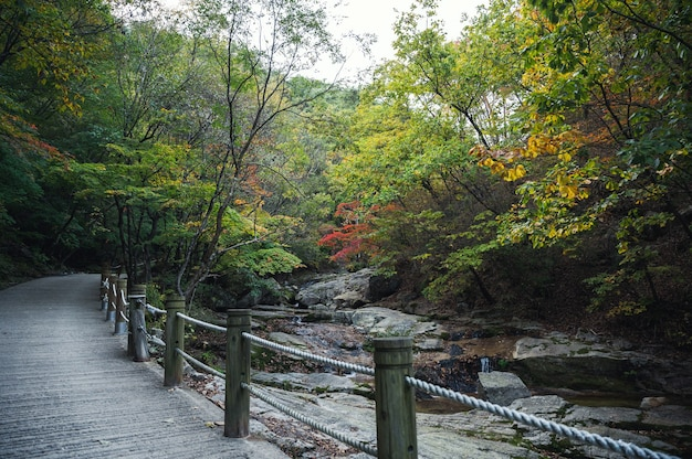 Stream stroomt in herfst bos met traject in nationaal park