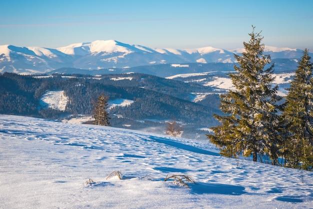 Strenge winterlandschap mooie besneeuwde sparren staan tegen een mistig bergachtig gebied op een koude winterdag. het concept van koude noordelijke natuur. copyspace