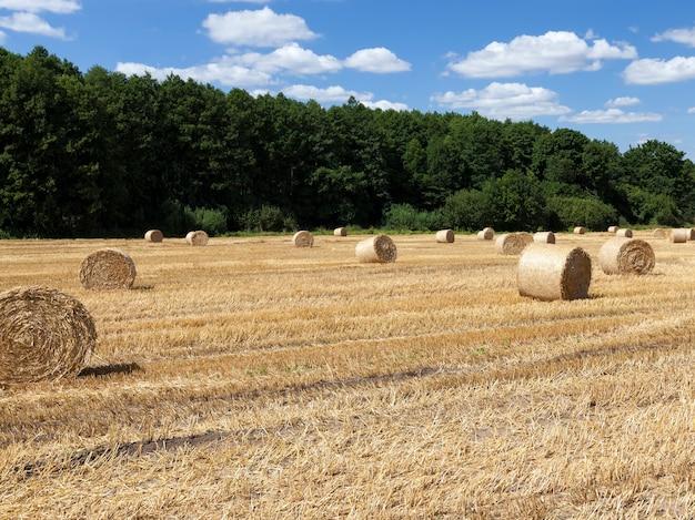 Stro op landbouwgebied dichtbij bos