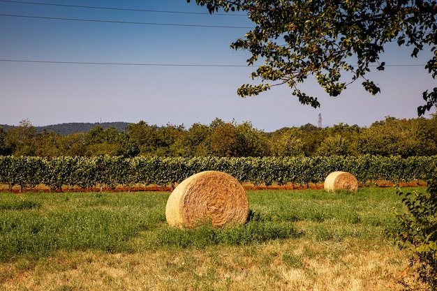 Strobalen op landbouwgrond, wijngaard