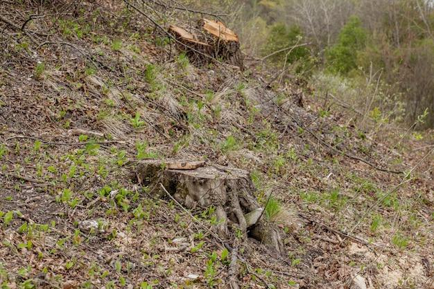 Stronken en boomstammen laten zien dat overexploitatie leidt