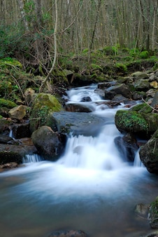 Stroom in het natuurpark gorbeia. baskenland. spanje
