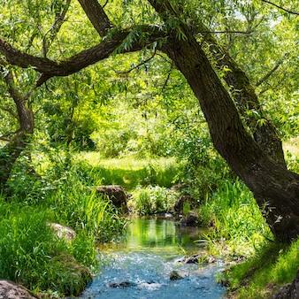 Stroom in het tropische woud. milieu zonnig landschap