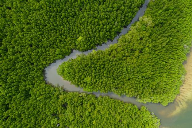 Stroomopwaarts mangrove bos luchtfoto bovenaanzicht