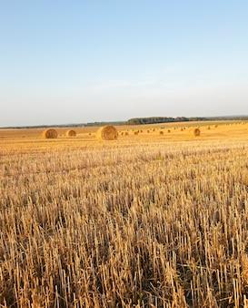 Strostapel - de gefotografeerde strostapel tijdens het oogstbedrijf van granen