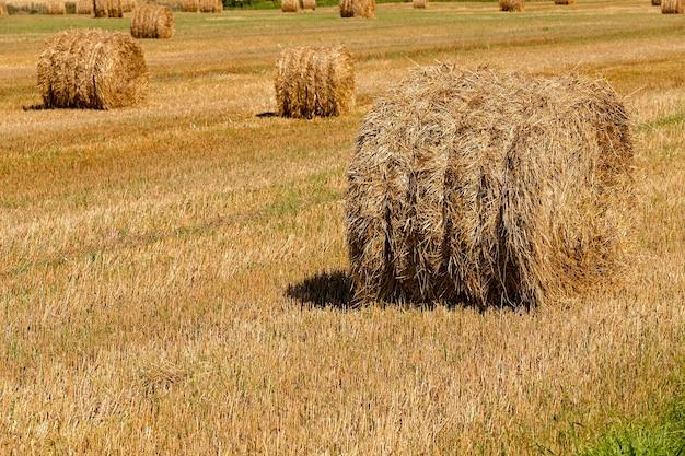 Strostapel - de gestapelde stapel van het stro dat is achtergebleven na het oogstgezelschap van tarwe