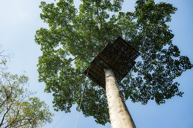 Structuur op een boom