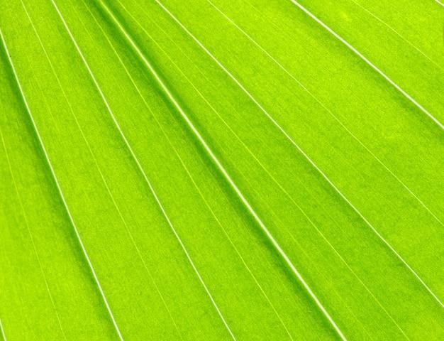 Structuur van blad natuurlijke achtergrond