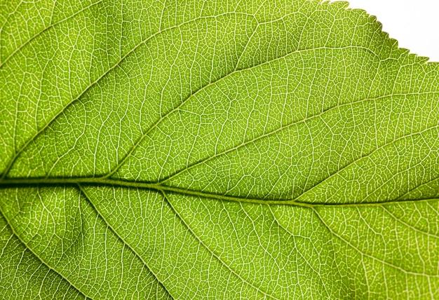 Structuur van een groen blad met achtergrondverlichting in het voorjaar