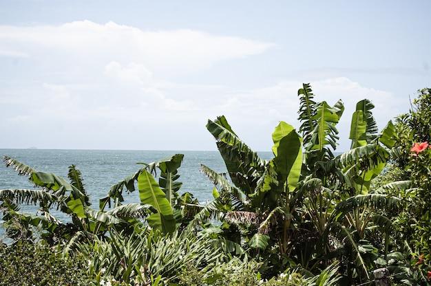 Struiken en bomen met de zee op de achtergrond in florianopolis, brazilië
