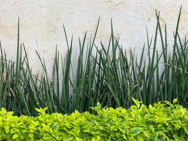 Struiken en planten bij de witte muur in een tuin