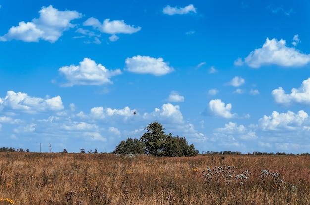 Struiken in een veld tegen de blauwe hemel