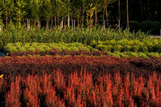 Struiken in potten en struiken in potten voor landschapsarchitectuur