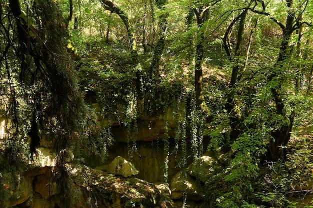 Struikgewas van dicht regenwoud dat op een zonnige dag aan de rand van een rotsachtig ravijn groeit