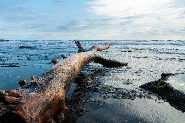 Stuk van drijfhout op zandstrand