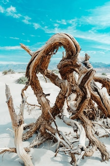 Stukken drijfhout op de zanderige grond