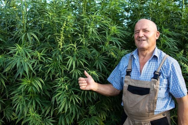 Succesvolle productie van cannabisplant