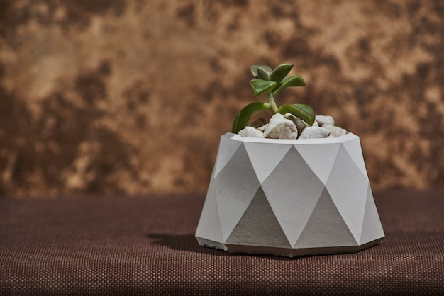 Succulent in concrete pot op bruin