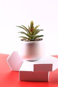 Succulent op een witte en rode achtergrond
