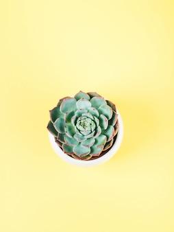 Succulente installatie in witte pot op geel