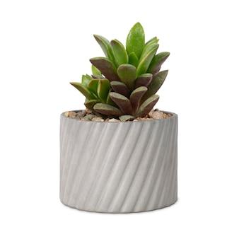 Succulente installatiemodel in een kleine grijze pot