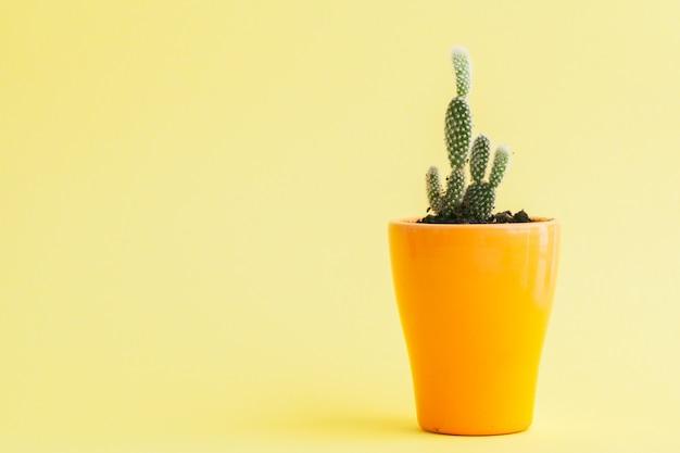 Succulente plant op een gele,