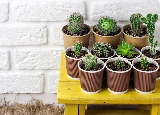 Succulente planten collectie in papieren bekers