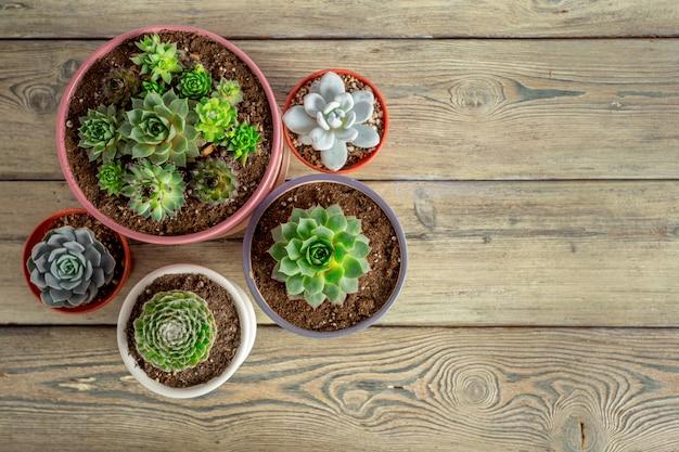 Succulente planten gegroepeerd op tafel