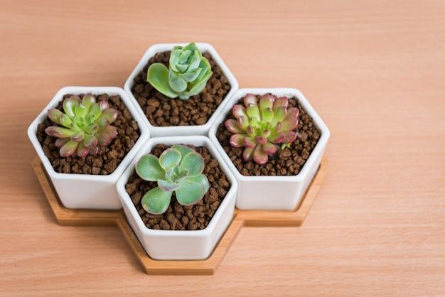 Succulente planten in potten op houten tafel, bovenaanzicht