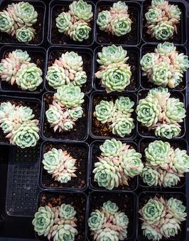 Succulente planten