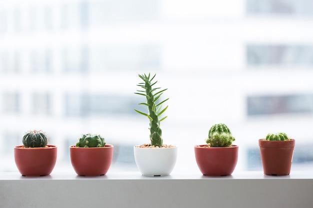 Succulente pottendecoratie bij venster in bureau