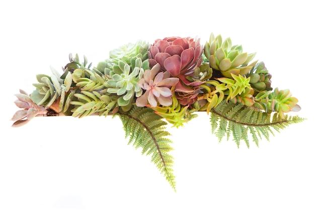 Succulente verse planten banner geïsoleerd op een witte achtergrond