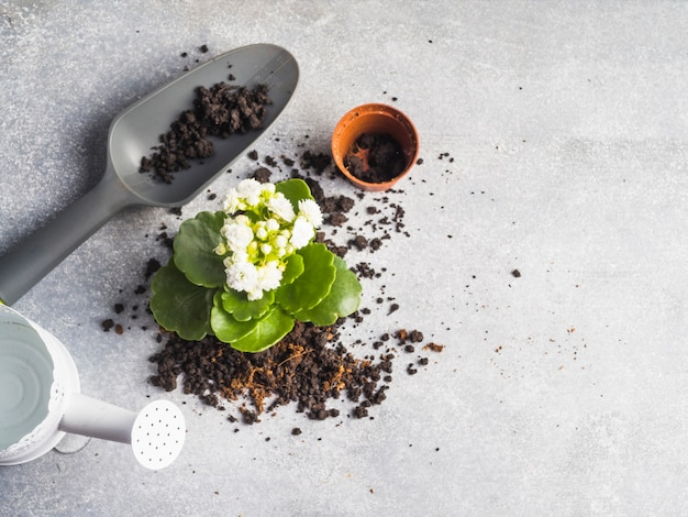 Succulente zaailing met pot en schop